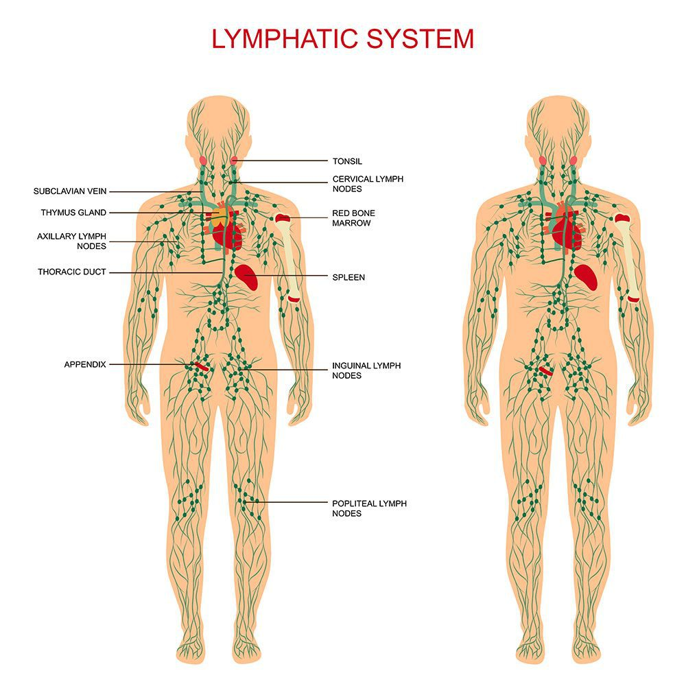 Lymphatic drainage massage accredited training course - Holistic ...
